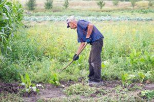 anciano-trabajando-jardin-abuelo-cultiva-tierra-su-jardin_78450-668-300x200.jpg